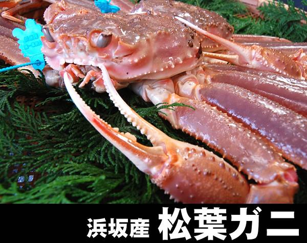 松葉カニ浜坂漁港